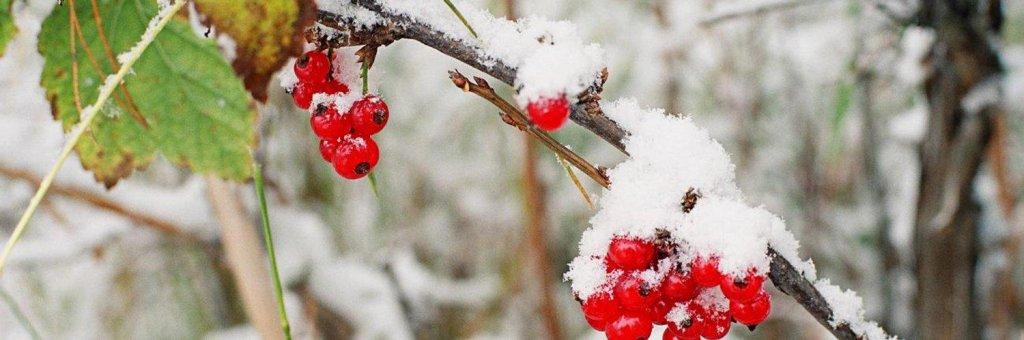 10 стихов русских поэтов о первом снеге23