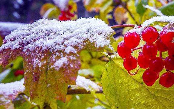 10-стихов-русских-поэтов-о-первом-снеге22