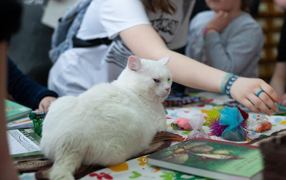 Библионочь с котами в Перми