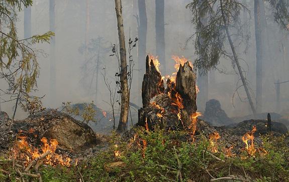 Русские писатели — о «зеленом материке», составляющем не только одно из основных богатств России, но и одну из основ менталитета ее жителей — и который этим летом вновь терзают пожары