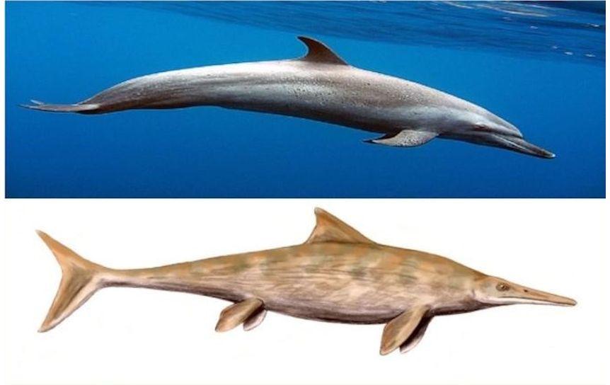 Дельфин и ихтиозавр  / thepresentation.ru